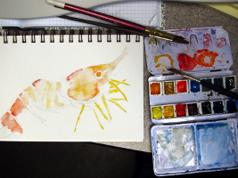 Heterocarpus ensifer, watercolor, marine series, marine art, watercolor setup